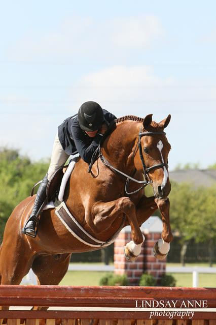 Holly Shepherd and High Society at Pin Oak Charity Horse Sho